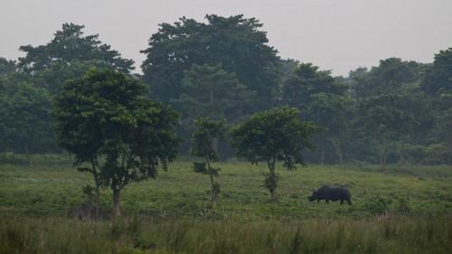 Rhino no. 1