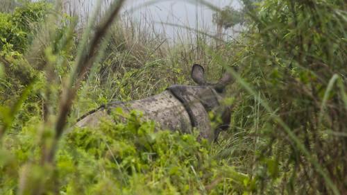 Rhino no. 3